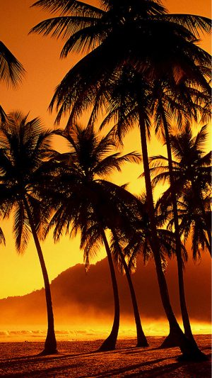Palm Trees at Beach iPhone 7 wallpaper