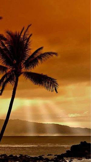 Beach Palm Trees iPhone 7 wallpaper