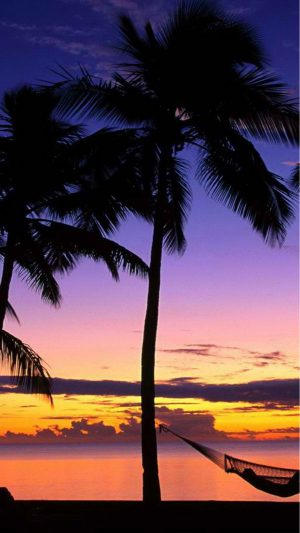 Beach Palmtrees iPhone 7 wallpaper
