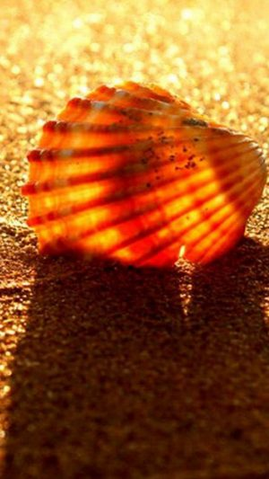 Golden Beach Shell iPhone 7 wallpaper