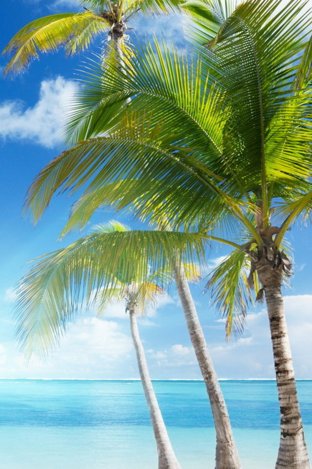 Caribbean sea and coconut palms iphone 7 wallpaper - Caribbean iphone wallpaper ...