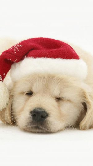 Puppy Christmas iPhone 7 wallpaper