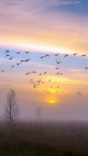 Autumn Dusk Geese iPhone 7 wallpaper