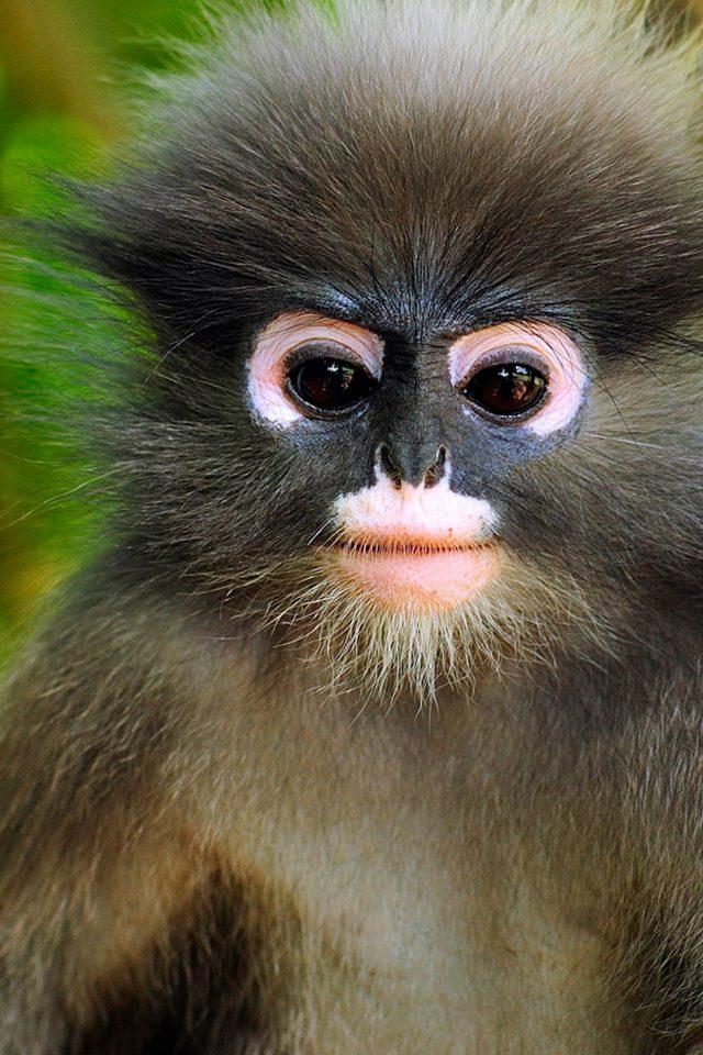 Cute Little Monkey IPhone Wallpaper