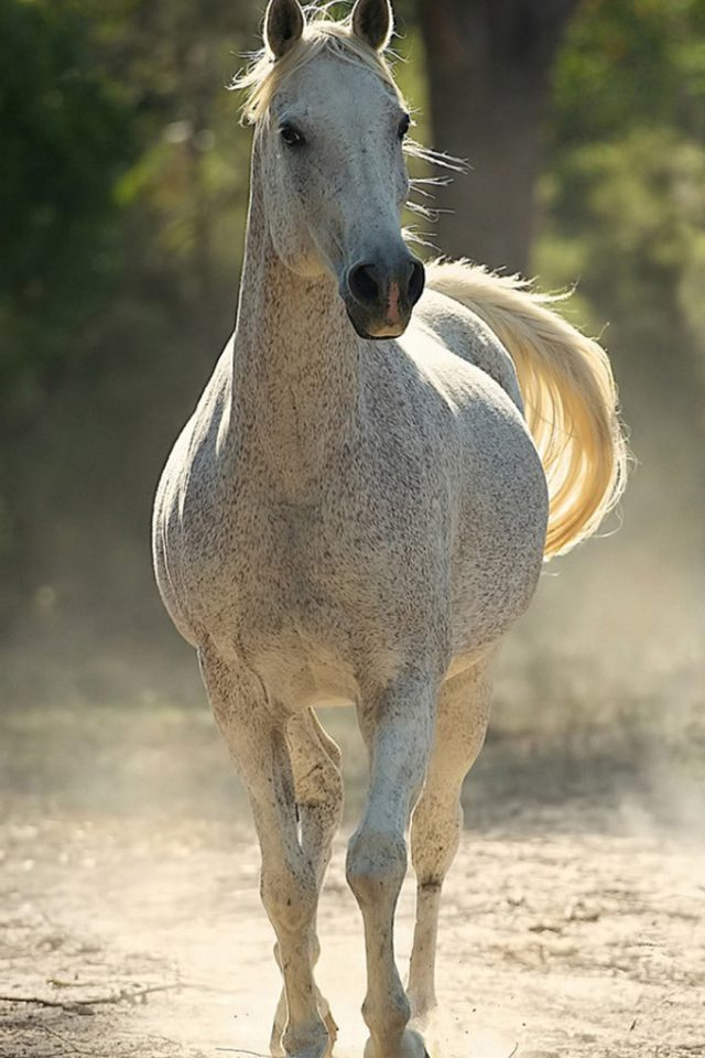 Running Horse Iphone 7 Wallpaper Iphone7wallpapers Co