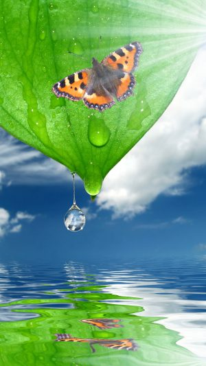 Sunshine Green Leaf Butterfly iPhone 7 wallpaper