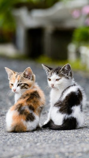 Two Very Cute Cats iPhone 7 wallpaper