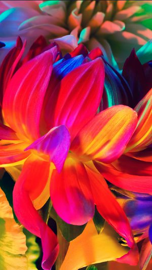 Apple MacBook Flower Rainbow Color Illustration Art Nature iPhone 7 wallpaper