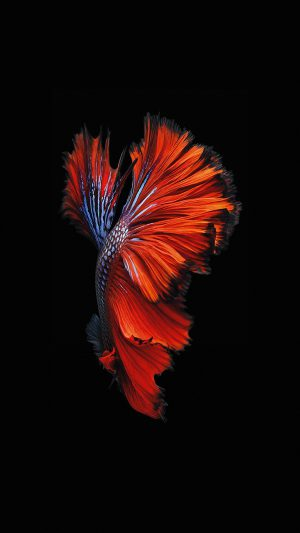 Apple IOS9 Fish Live Background Dark Red iPhone 7 wallpaper