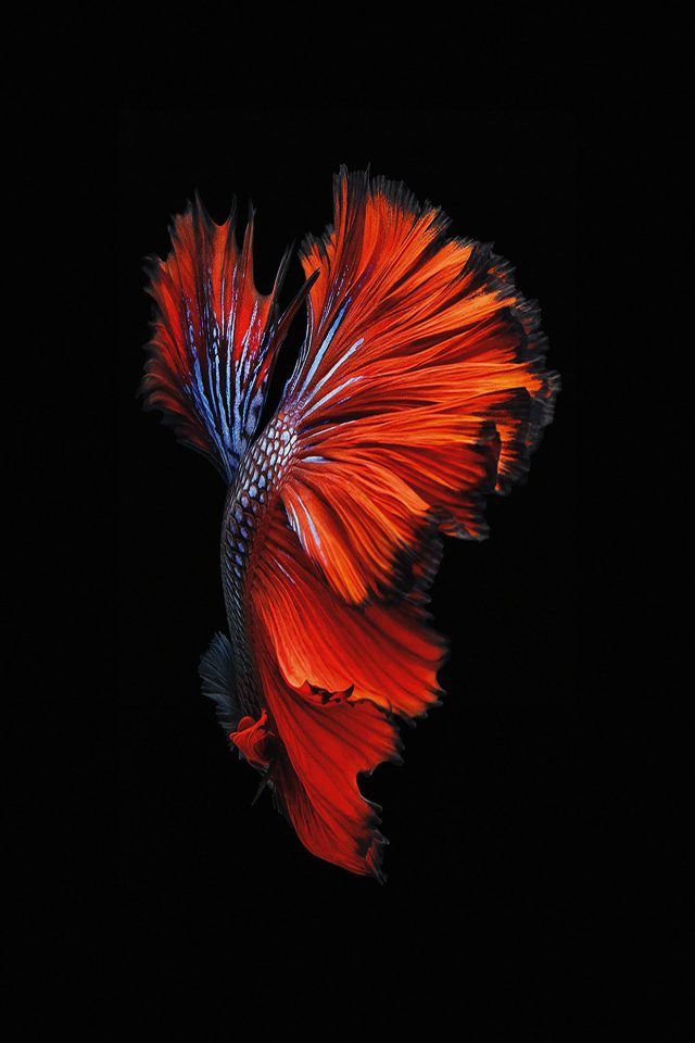 Apple IOS9 Fish Live Background Dark Red iPhone wallpaper
