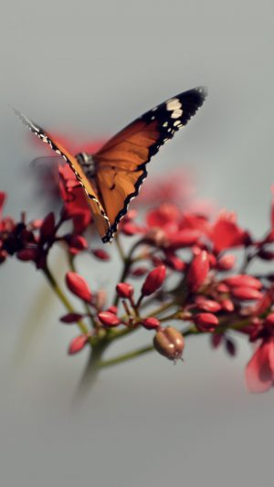 Nature Butterfly Flower Red iPhone 7 wallpaper