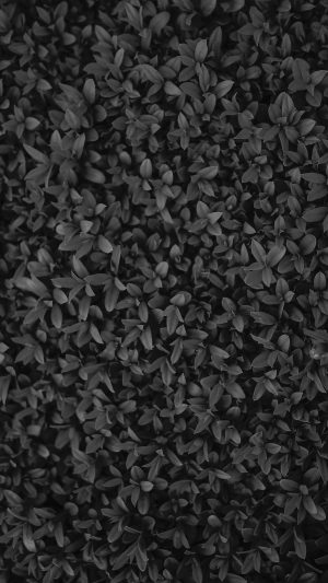 Nature Dark Bw Leaf Grass Garden Flower Pattern iPhone 7 wallpaper