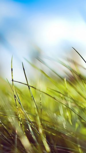Nature Green Grass Bokeh Summer iPhone 7 wallpaper