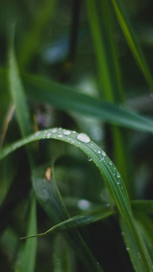 Nature Leaf Green After Rain iPhone 7 wallpaper
