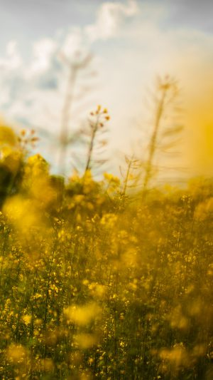 Nature Yellow Flower Bokeh Spring Happy iPhone 7 wallpaper