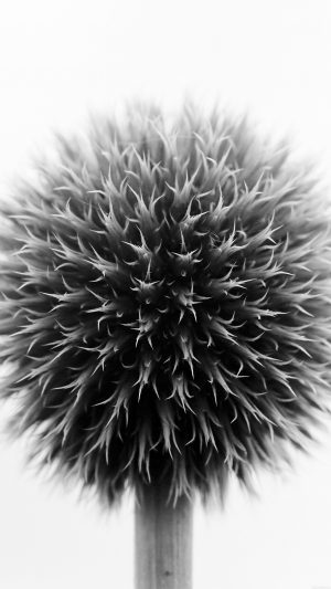 Ball Flower Circle Nature Bw iPhone 7 wallpaper