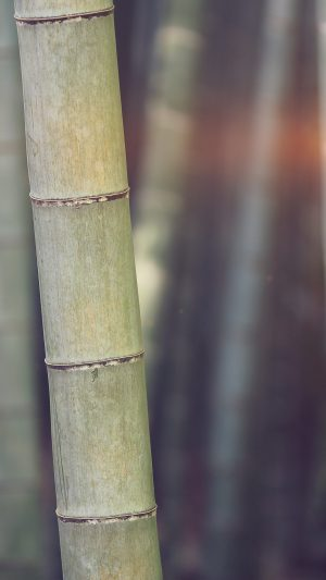 Bamboo Nature Tree Blue iPhone 7 wallpaper