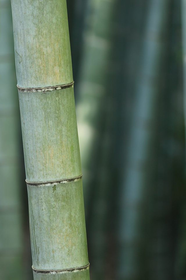 Bamboo Nature Tree Green iPhone wallpaper