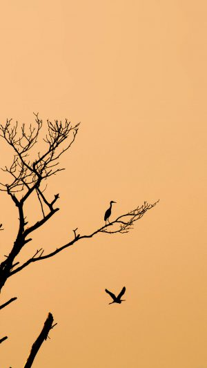 Bird Sunset Tree Nature Minimal iPhone 7 wallpaper