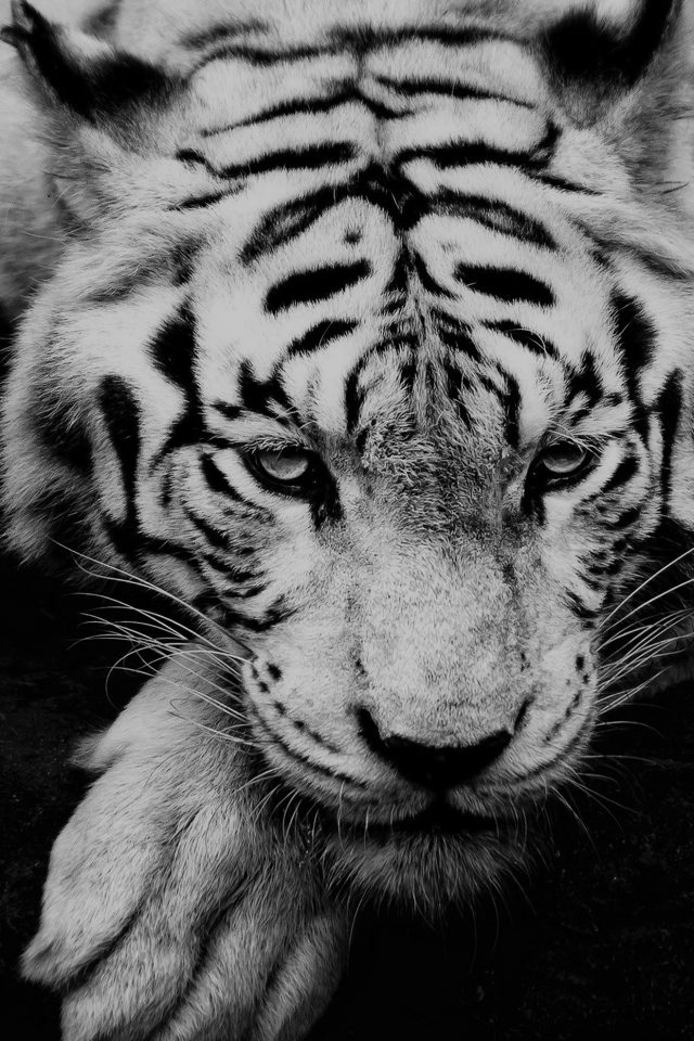 Bw Dark Tiger Animal IPhone Wallpaper