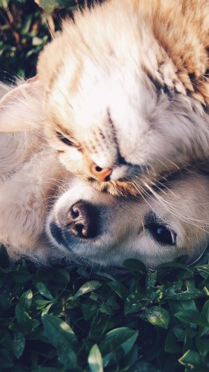 Cat And Dog Animal Love Nature Pure iPhone 7 wallpaper