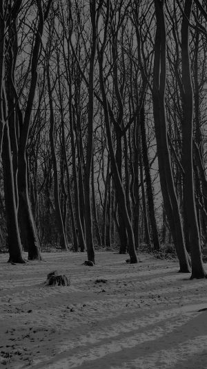 Cold Winter Forest Snow Nature Mountain Dark Bw iPhone 7 wallpaper