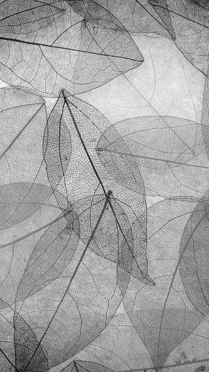 Dark Bw Leaf Art Fall Nature Pattern iPhone 7 wallpaper