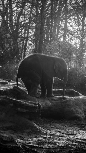 Elephant Dark Bw Animal Cute Nature Baby iPhone 7 wallpaper