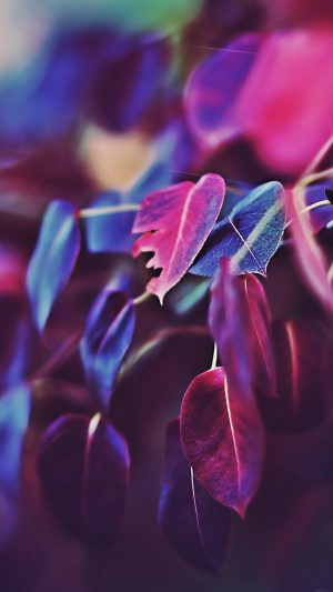 Fall Leaf Flower Bokeh Nature iPhone 7 wallpaper