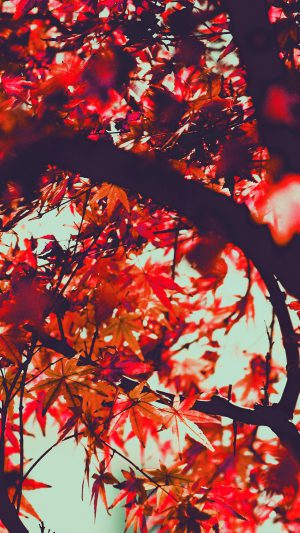 Fall Tree Leaf Autumn Nature Mountain Red iPhone 7 wallpaper