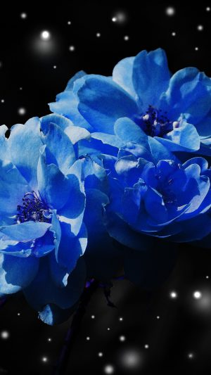 Flower Blue Snow Nature Art iPhone 7 wallpaper