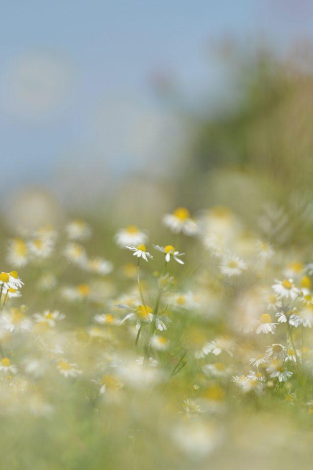 Flower Bokeh White Spring Nature Iphone 7 Wallpaper