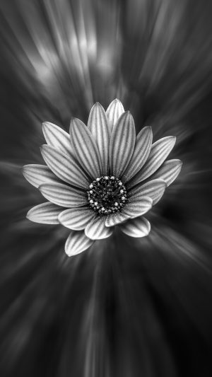 Flower Dark Black Nature Bw iPhone 7 wallpaper