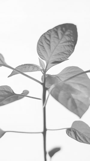 Flower Leaf Simple Minimal Nature Bw iPhone 7 wallpaper