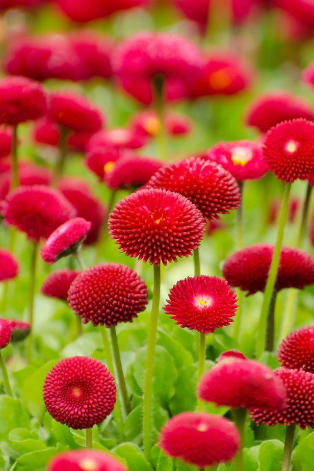 Flower Red Green Spring Bokeh Nature Iphone 7 Wallpaper