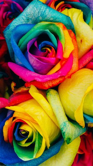 Flower Rose Color Rainbow Art Nature iPhone 7 wallpaper