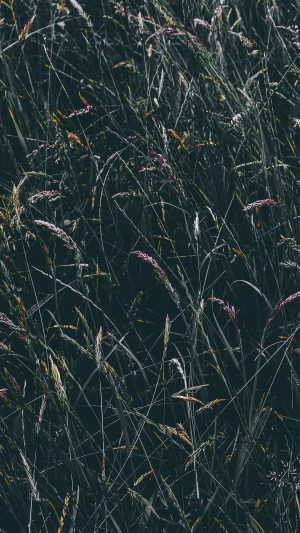 Flower Rye Green Dark Nature iPhone 7 wallpaper