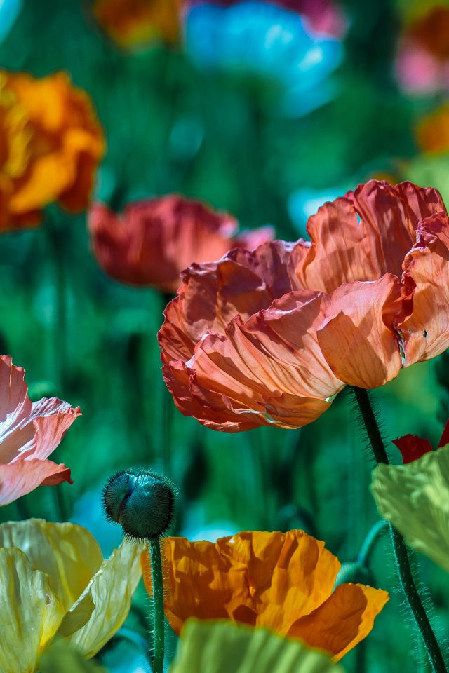 Flower Spring Nature Color iPhone wallpaper