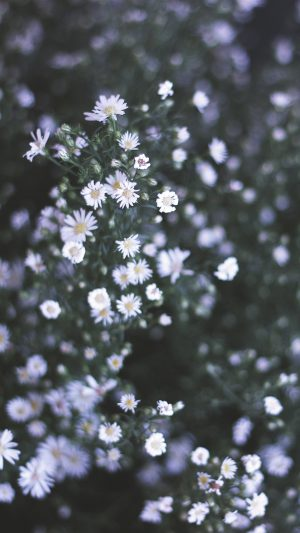 Flower White Spring Nature iPhone 7 wallpaper