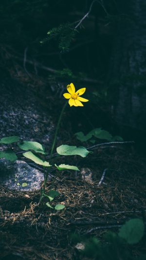 Flower Yellow Forest Wood Lonely Dark Nature iPhone 7 wallpaper