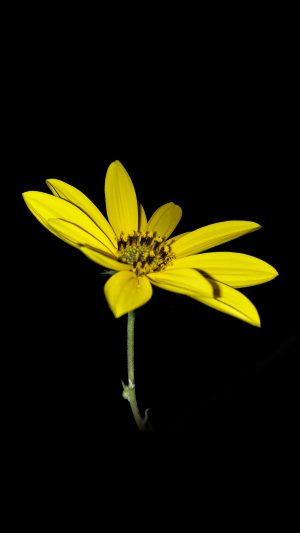 Flower Yellow Nature Art Dark Minimal Simple iPhone 7 wallpaper