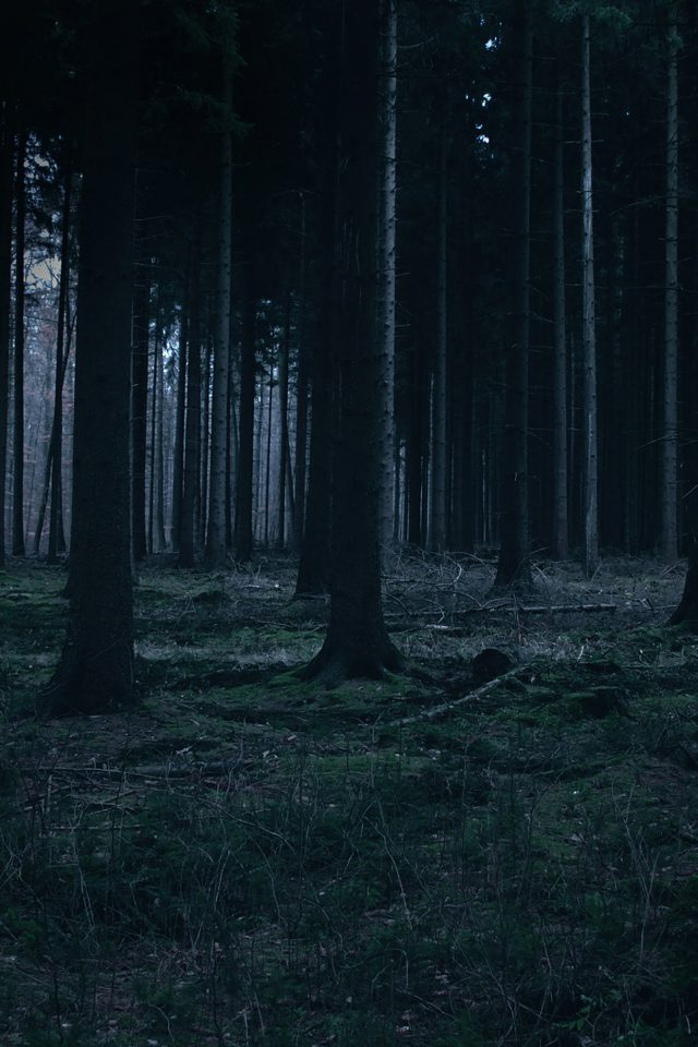 Forest Dark Night Trees Nature iPhone 7 wallpaper