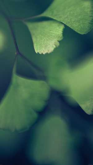 Good Luck Blue Clovers Leaf Nature iPhone 7 wallpaper