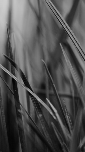 Grass Dark Bw World Garden Leaf Nature iPhone 7 wallpaper
