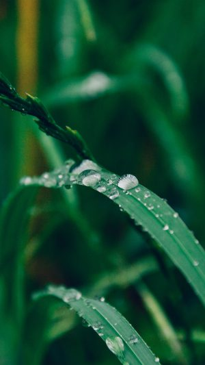 Grass Drop Water Rain Nature Forest iPhone 7 wallpaper