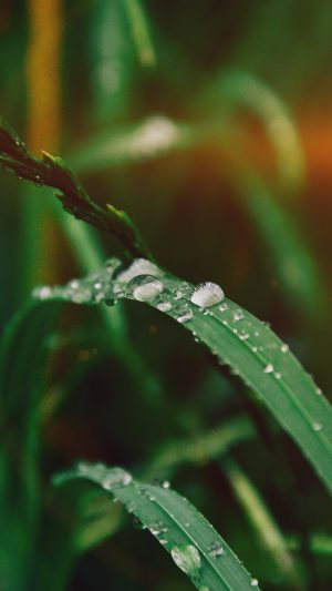 Grass Drop Water Rain Nature Forest Flare iPhone 7 wallpaper