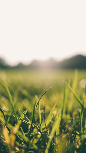 Grass Green Bokeh Light Summer Nature iPhone 7 wallpaper