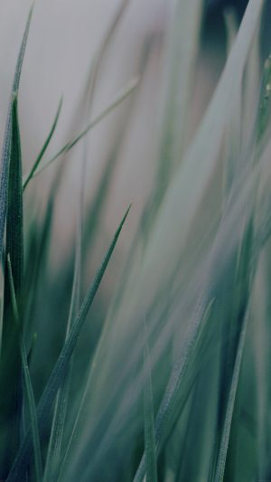 Grass Green World Garden Leaf Nature iPhone 7 wallpaper
