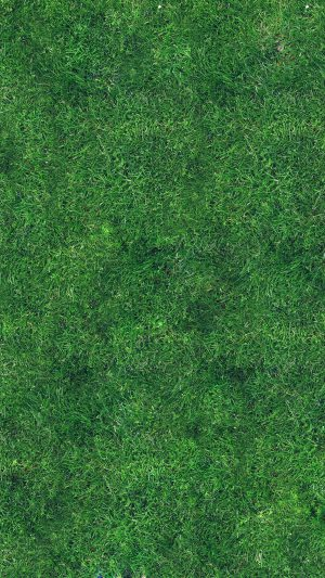 Grass Texture Nature Pattern iPhone 7 wallpaper