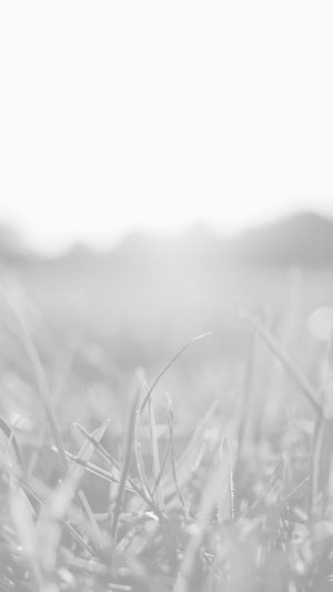 Grass White Bokeh Light Summer Nature iPhone 7 wallpaper